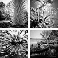Dallas Arboretum Chihuly 5